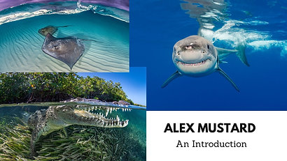 Alex Mustard - An Introduction