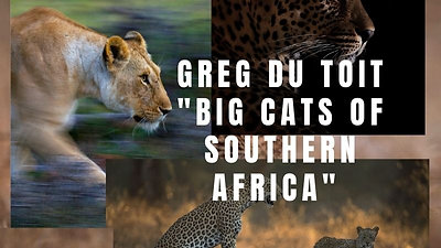 Big Cats of Southern Africa