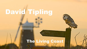 David Tipling The Living Coast