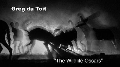 Greg du Toit - The Wildlife Oscars