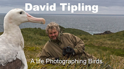 David Tipling, A Life Photographing Birds