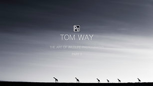 Tom Way -The Art of WIldlife Photography Part II