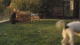 GUTHY RENKER DOG TRAINING