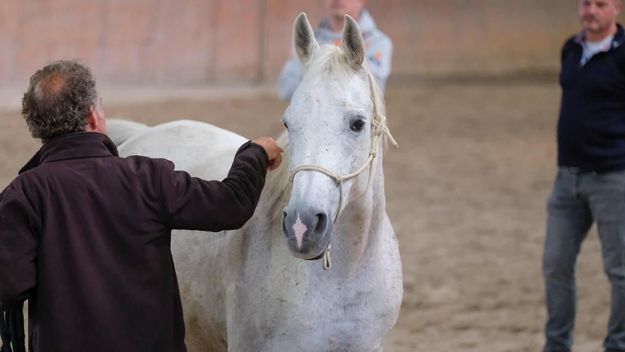 Pferd als Coach, Führungskräftetraining - Imagevideo aus den Anfängen von Insprofil