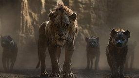 Rei Leão (2019) - Preparados