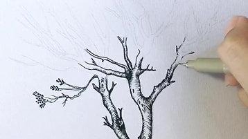 01 Olive Tree process