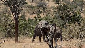 Wildlife camera showreel vimeo