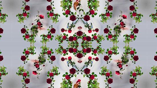 Rose_Website_1