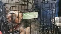 proper crate sizing