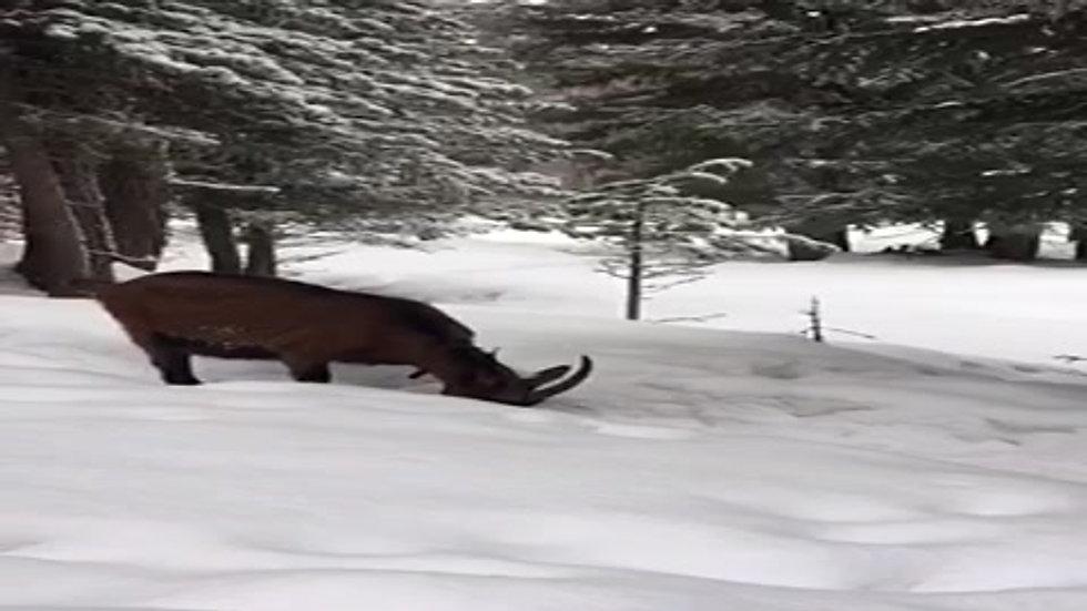 Mini Geiss - Dini Geiss im Schnee