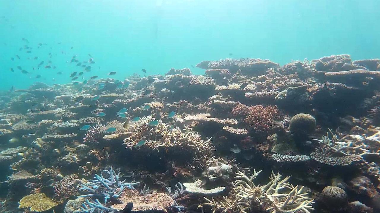 『奄美の海特集』 むちゃかなオリジナル海中動画ギャラリー
