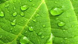 Scatola verde