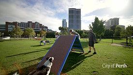 Dog Agility Park