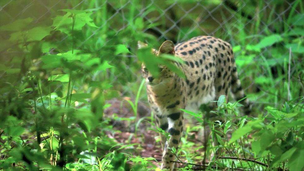 Malawi Wildlife Rescue - Sizzle