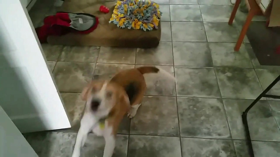 Dave the Beagle & the Magic Words