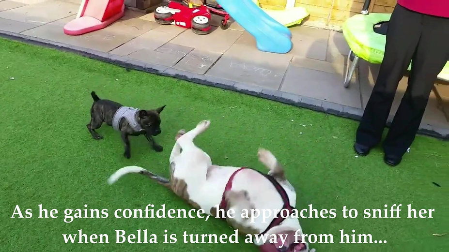 Calming Signals with Bella & P.J. pup