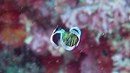 Flatworm Swimming