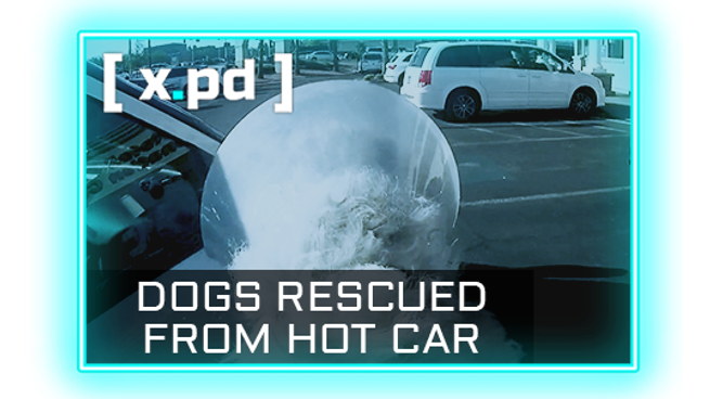 Freebie — Las Vegas, NV — Police Rescue Dogs Trapped In Hot Vehicles - HD 1080p