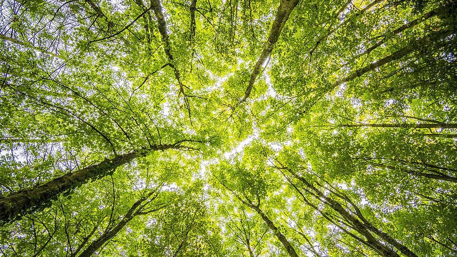 TREE PLAN CHANNEL