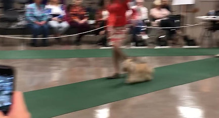 Best of Breed 2019 - Video 3