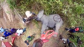 GoPro - Elephant Translocation