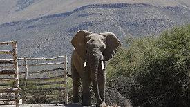 Atherstone Elephants