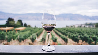 Wine Knows