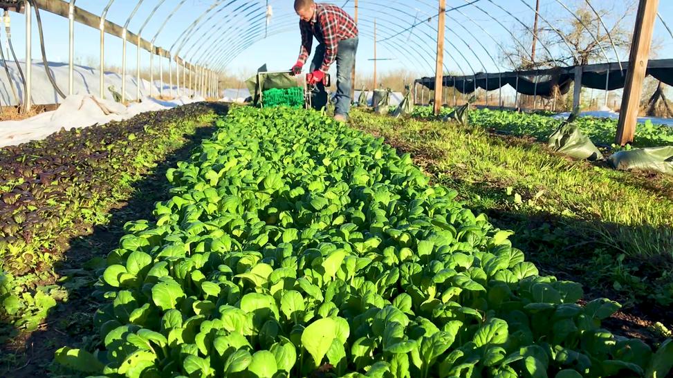 Local, Fresh, Sustainable, AY RAAM Farms, See Our Farm And Meet Our FamilyAY RAAM Farms 2021