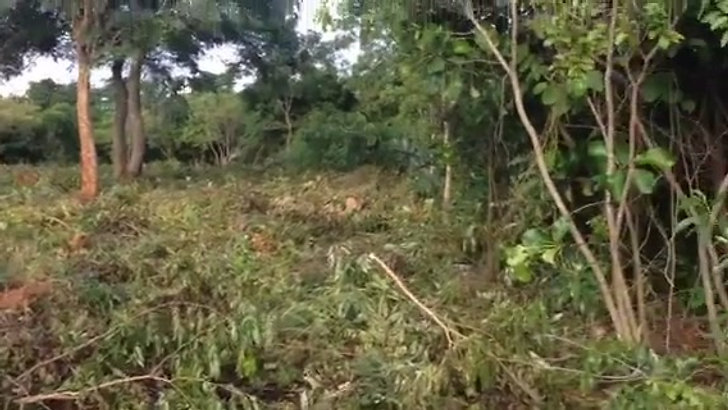 clearing of land