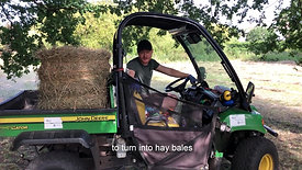 Friends of Barnes Common Hay Making