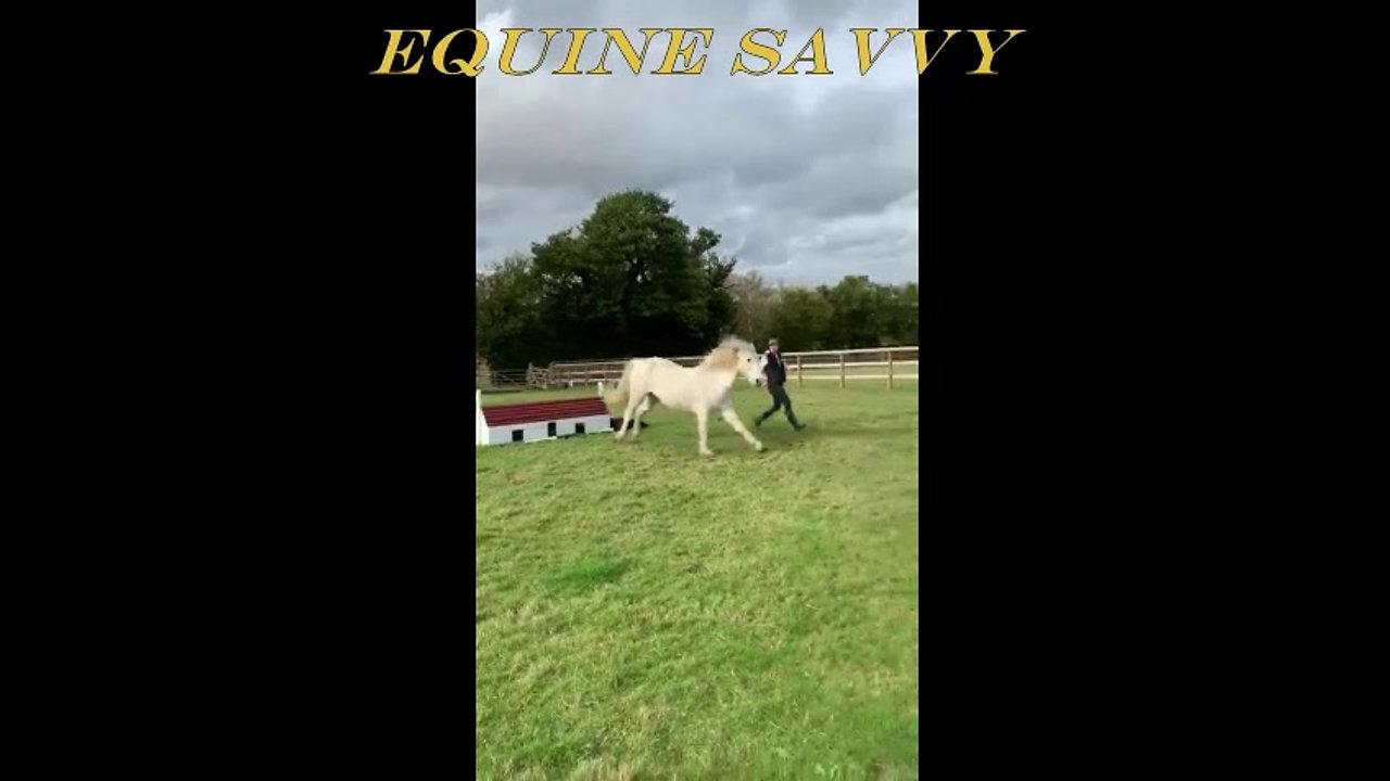 Intro to Equine Savvy