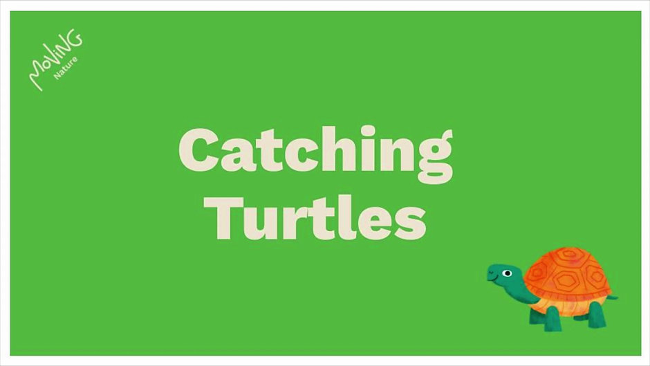 The Turtle Channel