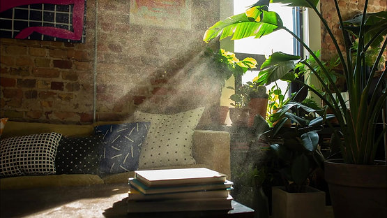 Plants to Purify the Air