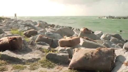 Square Grouper Trailer