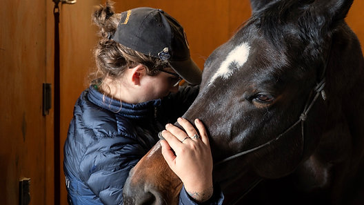 Balancing Point Osteopathic Equine Body Work & Training