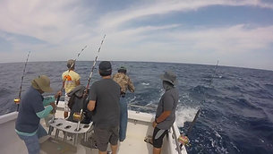 Sailfish off St. Augustine - Endless Summer Charters