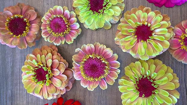 Flower Subscription Video