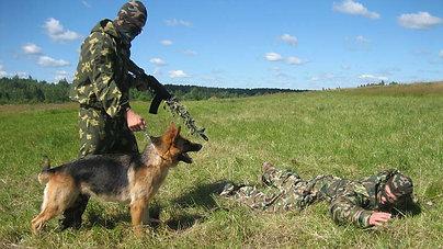Курс специальной дрессировки для служебных собак
