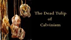Redemption #7: The Dead Tulip of Calvinism
