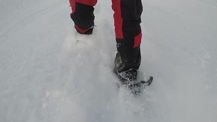 Snowshoes run