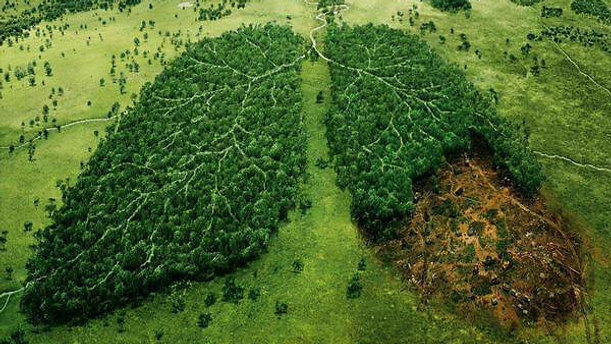 Less deforestation