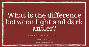 What is the difference between light and dark antlers?