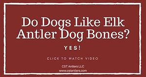 Do Dogs Like Elk Antler Dog Bones