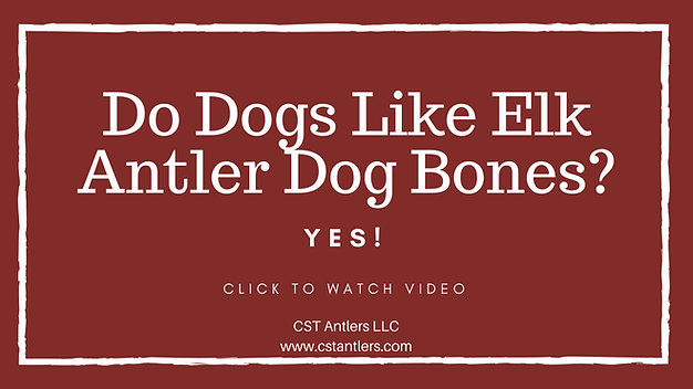 Do Dogs Like Elk Antler Dog Bones
