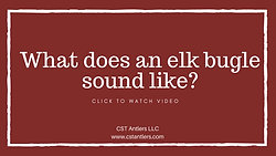 What does an elk bugle sound like?