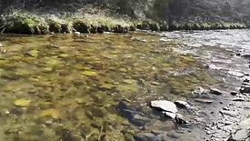 Impuls-Meditation & Körperreise (7) Mit dem inneren Fluss...