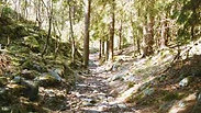 Norwegian Ancient Paths (ENG)