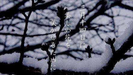 冬の桜受験生3月編