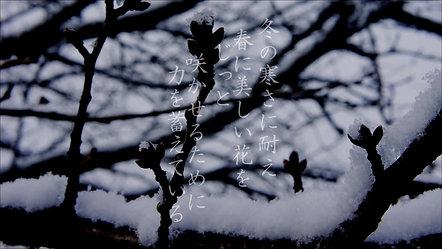 CM「冬の桜編」