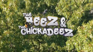 The Beez and the Chickadeez (trailer)